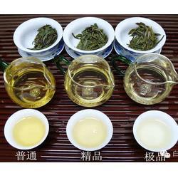 北京白茶茶山租賃-合熹堂-白茶茶山租賃多少錢圖片