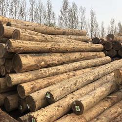 花旗松原木一般多少米-武林木材-河南花旗松原木图片