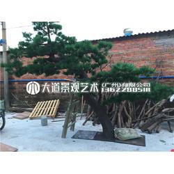 现代新中式仿真植物盆景 公司前台会议室办公室迎客松树创意摆件图片