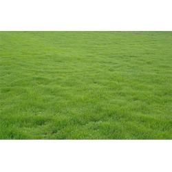 草坪、春风草坪物优价廉(图)图片