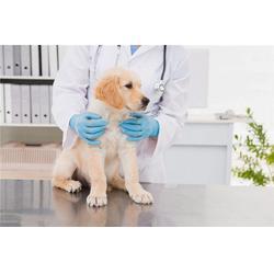 西安宠物诊疗,宠物医院,贝贝宠物俱乐部图片
