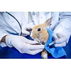 寵物醫院、西安狗狗寵物醫院、貝貝寵物俱樂部圖片