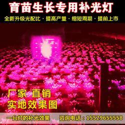 植物生长灯,棚鲜牌植物生长灯,led植物生长灯生产厂家图片