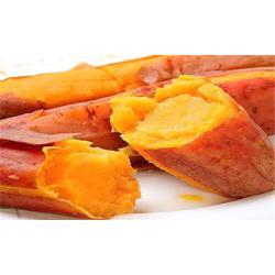 烤薯店专用蜜薯|后赵庄红薯|河源烤薯店专用蜜薯图片