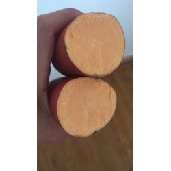 后赵庄红薯 哪里有红薯苗-红薯图片