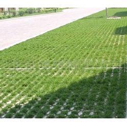 停车场生态植草地坪图片