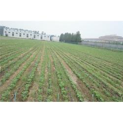 湖北农业喷灌系统设计技术-湖北农业喷灌系统设备-武汉欣农科技图片