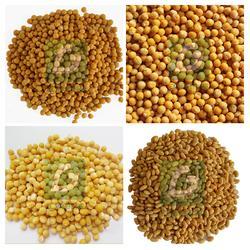 黄豆脱皮去皮机,豆类抛光机图片
