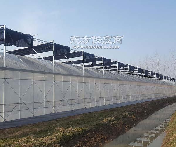 北京无土栽培,瑞众农业,北京无土栽培供应商图片