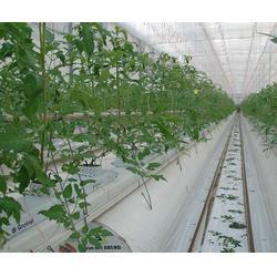 瑞众农业(图)|节能温室大棚造价|节能温室大棚图片