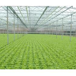 温室大棚设计哪里有、瑞众农业(在线咨询)、温室大棚设计图片