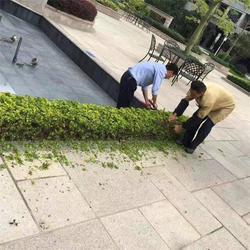 广州乡道生活垃圾处理_乡道生活垃圾处理_美都清洁图片