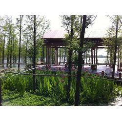 水生植物人工浮岛-华州环境工程(在线咨询)-滁州浮岛图片