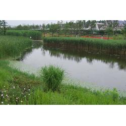 真空体浮床-浮床-南京华州环境工程公司(查看)