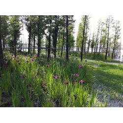 水生植物人工浮岛-华州环境工程(在线咨询)连云港浮岛图片