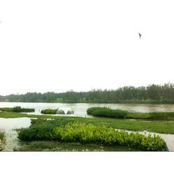 水生植物浮床-浮床-南京华州环境工程公司(查看)图片
