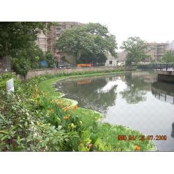 绿化|南京华州环境工程公司|立体绿化图片