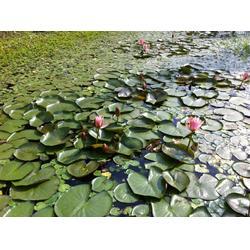 人工生态浮岛-连云港浮岛-华州环境工程有限公司图片