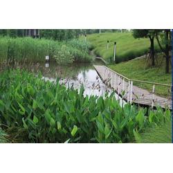 水生植物浮島、華州環境工程、雨花臺區浮島圖片