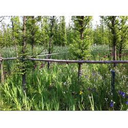 水生植物浮島-宿遷浮島-華州環境工程圖片