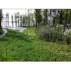 六合区生态修复,华州环境工程,河道生态修复图片