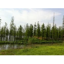 植物浮岛-合肥浮岛-南京华州环境工程(查看)图片