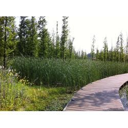 玄武区人工浮岛-华州环境工程-人工浮岛水生植物图片