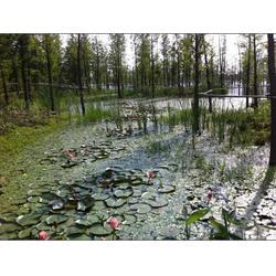 人工生态浮岛、华州环境工程、生态浮岛图片