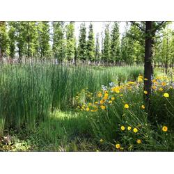 水生植物浮床-宿州浮床-华州环境工程图片