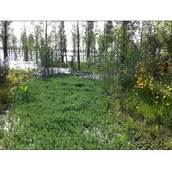 环境生态修复_华州环境工程(在线咨询)_宣城生态修复图片