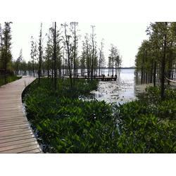生态浮岛-泰州浮岛-华州环境工程图片