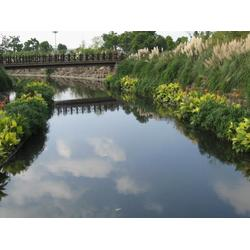 水生植物浮岛-华州环境工程(在线咨询)扬州浮岛图片