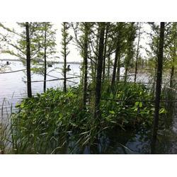 人工生态浮岛-华州环境工程(在线咨询)湖州浮岛图片