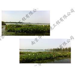 华州环境工程 人工浮床制作-江宁区人工浮床图片