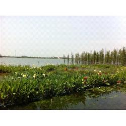 水生植物人工浮岛-华州环境工程公司-上海浮岛图片