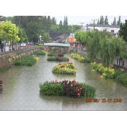 生态浮床-华州环境工程-衢州浮床图片