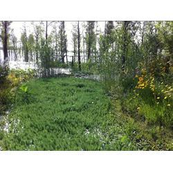 植物浮岛-浮岛-华州环境工程有限公司图片