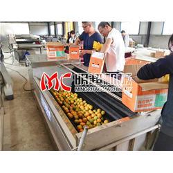 重庆土豆毛刷清洗机,土豆毛刷清洗机哪里卖,明超公司图片