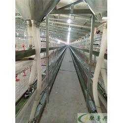 肉鸡笼,鲁兴农牧(推荐商家)图片