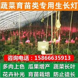 為什么要用植物燈-必然科技-植物燈圖片