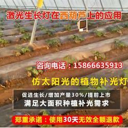 衢州植物灯-必然科技-植物灯 普通灯价格