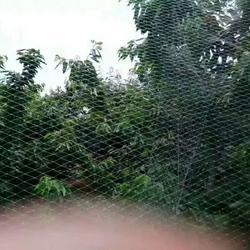 辽宁防鸟网-必然科技-不锈钢防鸟网图片