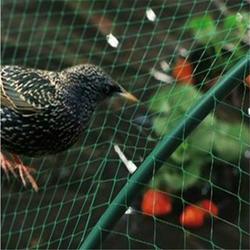 防鸟网-营口防鸟网-必然科技(查看)图片