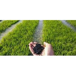湖南百金惠太阳能灯 农作物矿物肥电话-兰州农作物矿物肥图片