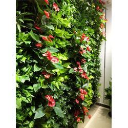 深圳垂直绿化植物墙、昱顺实业(在线咨询)、垂直绿化图片