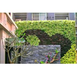 昱顺实业 垂直绿化植物墙-植物墙图片