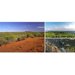 专做绿化工程 国土生态修复工程 边坡绿化施工专业快速图片
