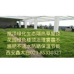 未央区房顶花园防晒隔热屋顶绿化绿地贴图片