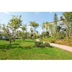 绿化苗木-花园绿化苗木-清和园林图片