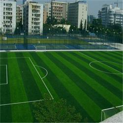 门球场运动草坪图片